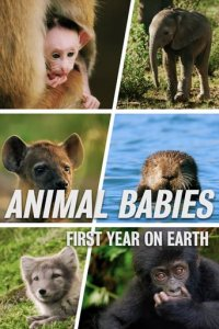 Animal Babies: First Year On Earth Cover, Poster, Animal Babies: First Year On Earth DVD